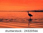 Water Bird At Sunset   Port...