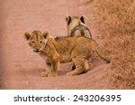 Lion Cubs At Serengeti Nationa...