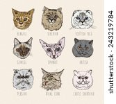 Set Of Cats. Breeds. Siamese ...