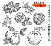 hand drawn decorative orange... | Shutterstock .eps vector #243233179