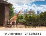 australia sydney city taronga... | Shutterstock . vector #243256861