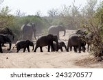 portrait of african elephant in ... | Shutterstock . vector #243270577