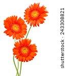 Gerber Flower Isolated On Whit...