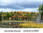 Small photo of Marsh in Algonquin Park