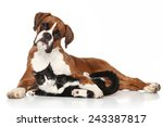 Stock photo cat and dog together lying on the floor 243387817