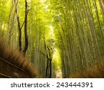 bamboo forest in japan ... | Shutterstock . vector #243444391