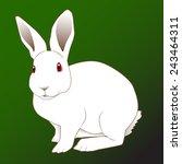 Stock vector white rabbit 243464311