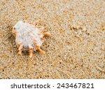 shell on tropical beach   Shutterstock . vector #243467821
