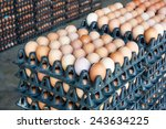 eggs from chicken farm in the... | Shutterstock . vector #243634225