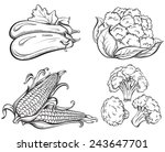 hand drawn vegetables set. corn ... | Shutterstock .eps vector #243647701