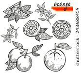 hand drawn decorative orange... | Shutterstock . vector #243688459