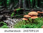 Wild Forest Mushroom In The...