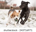 Stock photo two dogs playing with ball 243716971