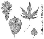 Ink Hand Drawn Leaves Of Oak ...