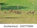 New Deer Herd