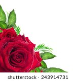 Stock photo red rose flower with green leaves on white background corner border 243914731