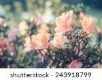 Azalea Flower  Azalea Flower I...