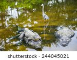 Alligator Family Poses In The...