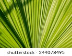 texture of leaf on light and... | Shutterstock . vector #244078495