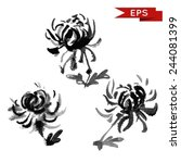 chrysanthemum ink illustration. ... | Shutterstock .eps vector #244081399
