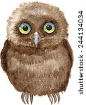 Little owl drawing by watercolor, hand drawn vector illustration