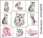 Stock photo collage from gray kitten photos 244238509