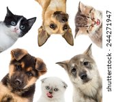 Stock photo group of pets looking 244271947