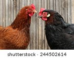 colorful chickens on poultry... | Shutterstock . vector #244502614