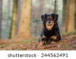 a portrait of a dog of relaxing ... | Shutterstock . vector #244562491