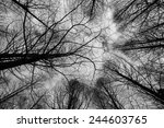 Treetops In Autumn Painting Th...