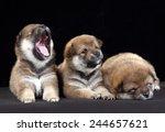 Three Puppies Lie Close