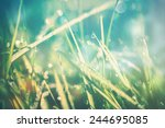 Bright Background Grass With...