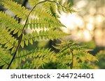 fern leaves | Shutterstock . vector #244724401