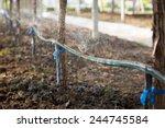 water springer in the vineyard... | Shutterstock . vector #244745584