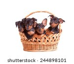 Cute Puppies In A Basket  ...