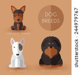 dog breeds    Shutterstock .eps vector #244979767