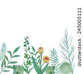Watercolor Herbal Elements...