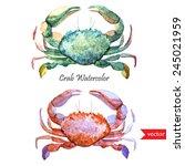 Crab  Watercolor  Ocean
