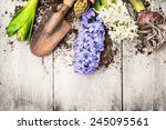 spring gardening background... | Shutterstock . vector #245095561