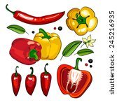 hand drawing collection paprika ... | Shutterstock .eps vector #245216935