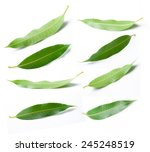 Collage Of Mango Leaves