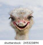 Ostrich  Struthio Camelus.