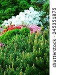 garden arrangement with...   Shutterstock . vector #245351875