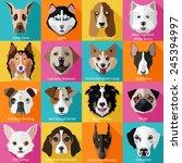 set of flat popular breeds of... | Shutterstock .eps vector #245394997
