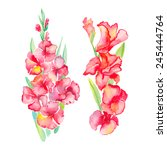 gladiolus. isolated flowers.... | Shutterstock .eps vector #245444764