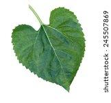 Sunflower Leaf In White...