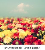 Field Of Flowers  Image Is...