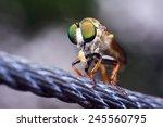Macro Big Eyes Of Green Fly