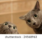 Two Funny Cats Look In Wide...