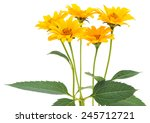 Bouquet Yellow Flowers Isolate...